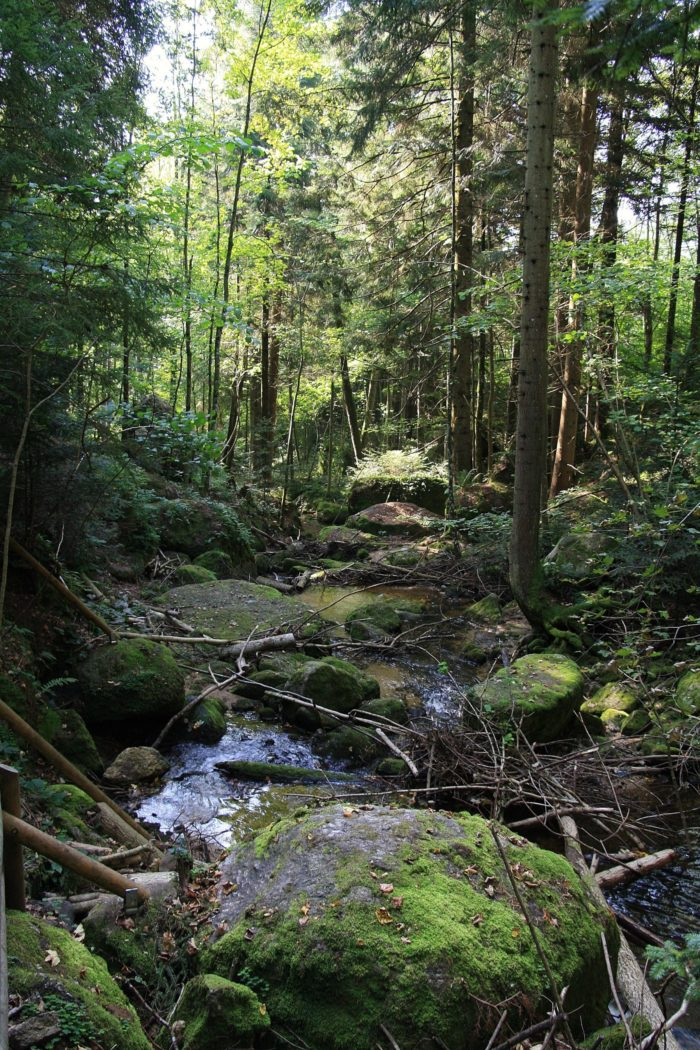 Wald; mit Kindern im Wald; Waldviertel